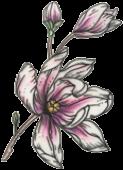 fleur-tatouage-artistique-116x160